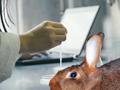 Balanzas para animales en su uso pratico.