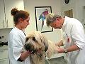 Básculas para veterinarios en su uso pratico.