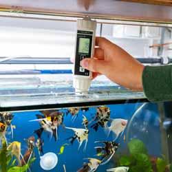 Midiendo el oxígeno en un acuario con el medidor de oxígeno serie PCE-DOM