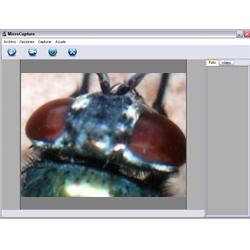 Cabeza de un insecto observada con el microscopio USB