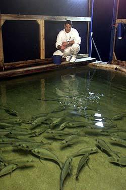 Con un luxómetro se puede analizar y entender los fenómenos subyacentes de la iluminación artificial en los peces.